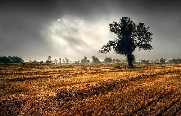 Through The Mist by Fma7