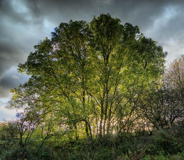 A tree by BillRookery