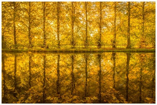 Autumn Glow. by Satlight