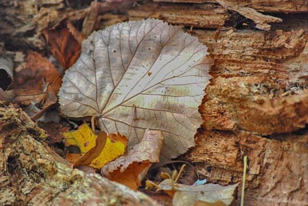 Autumn leaf by KrazyKA