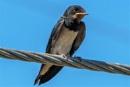 Little Bird by geoffgt