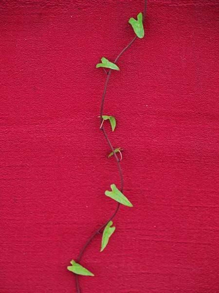simplicity by LaoCe