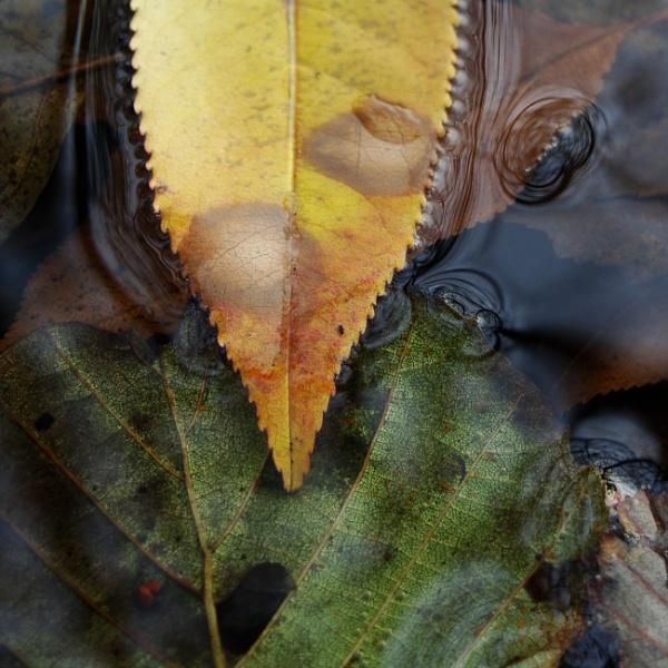 Autumnal Gleam Series #73 by PentaxBro
