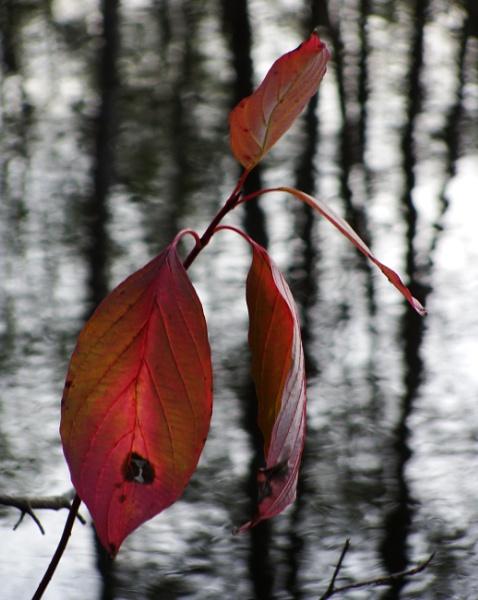 Autumnal Gleam Series #78 by PentaxBro