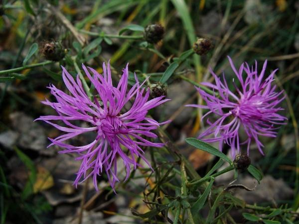 Autumnal Series - Wildflowers by PentaxBro