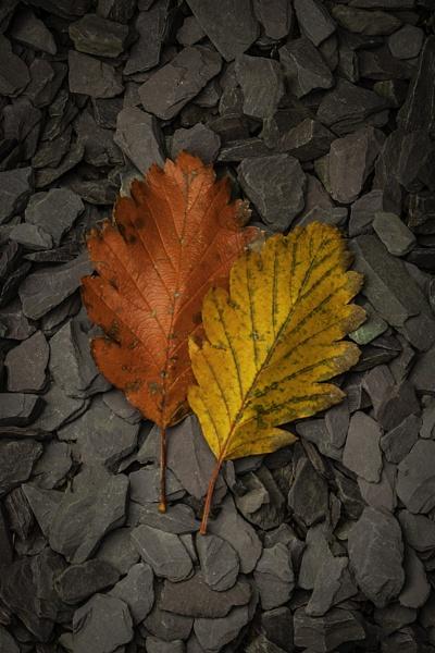 Autumn Leafs by sjr