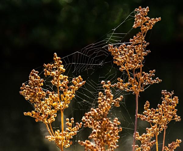cobweb by dven