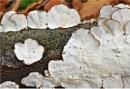 Fungus 2 by MalcolmM