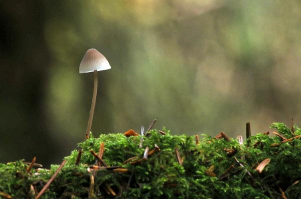 Mushroom by viscostatic