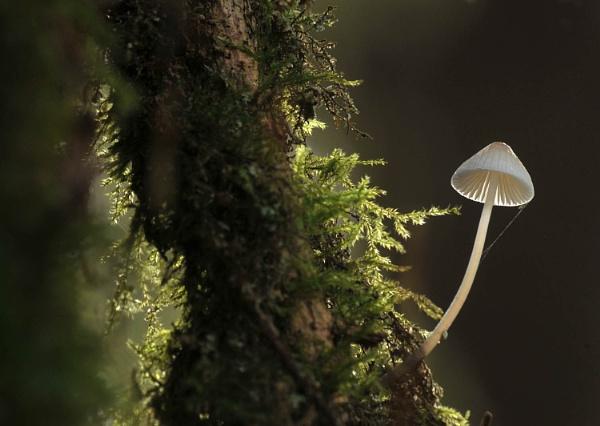 Mushroom 3 by viscostatic