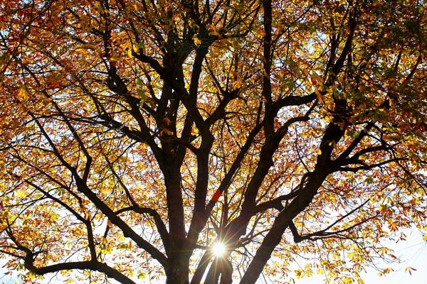 Autumn Sunshine by eyewhy