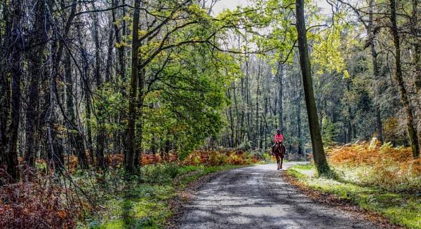 ashridge ride by jimlad