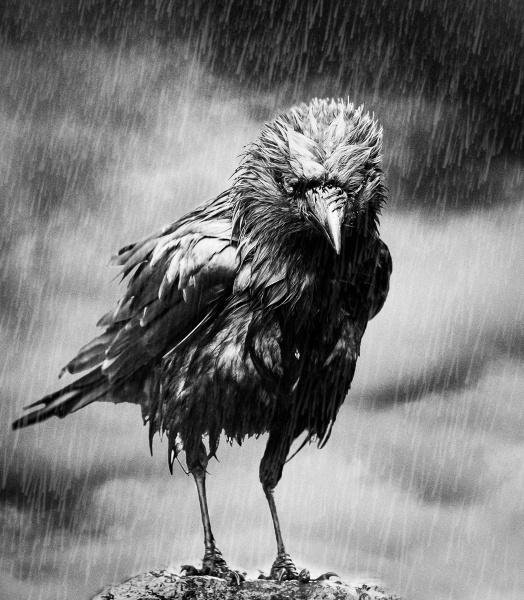 Gloomy weather by JFitz