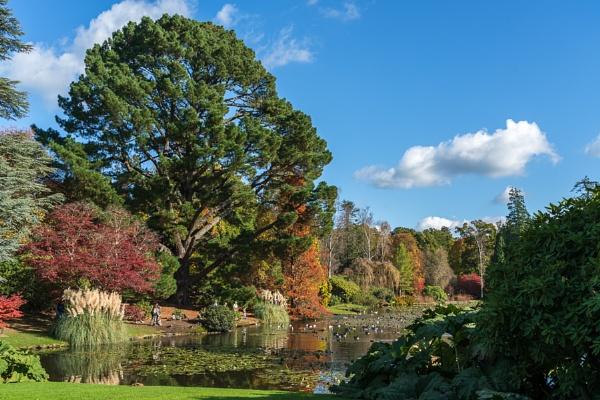 View of Sheffield Park Gardens in Autumn by Phil_Bird