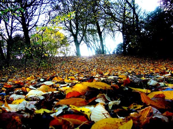 Leaf Landscape by ChrisBilton