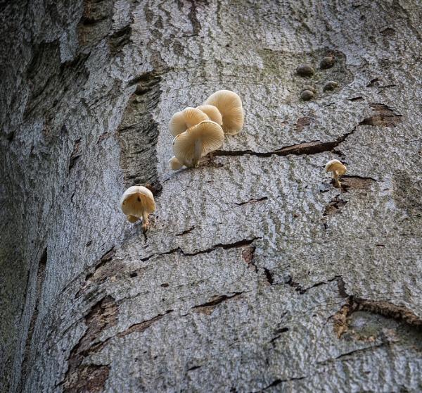 Hi-Rise Fungus