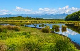 Papaitonga Wetland Reserve. (1418)