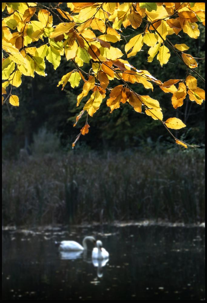 Autumn serenity......