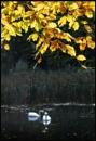 Autumn serenity...... by Niknut