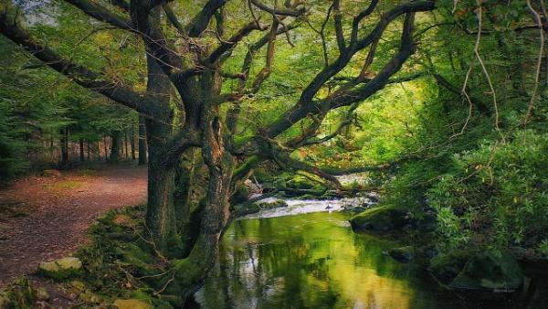 autumn -N.Ireland by atenytom