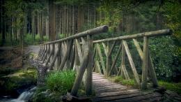 where the elves walk