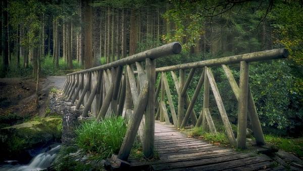 where the elves walk by atenytom