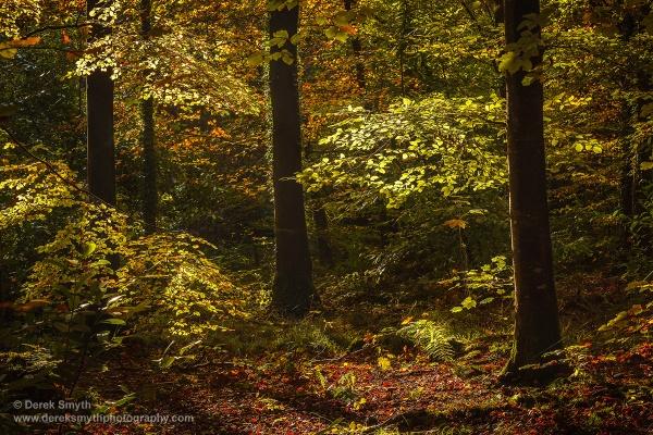 Autumn Glory by Porthos
