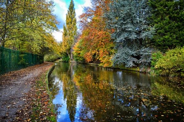 Fallen Leaves by lufc62