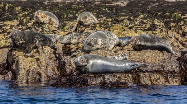 Farne Island Seals by john_starkey