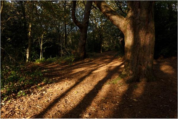 Woodland Shadows by dark_lord