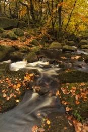 Flowing Through Autumn