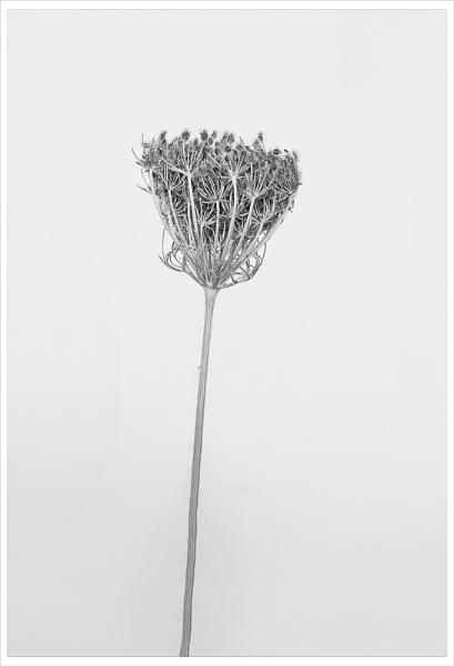 a touch of bossfeld by gavrelle