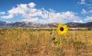 Prairie Sunshine by Trevhas