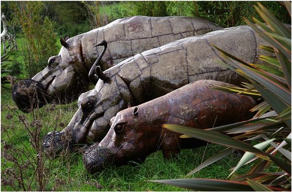 Three Hippos by johnriley1uk