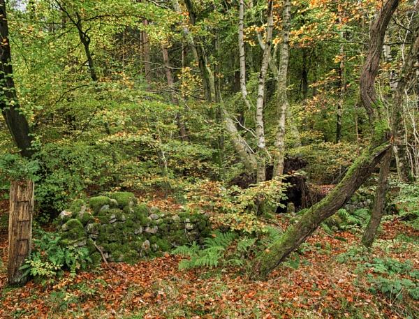 Autumn woodland by BillRookery