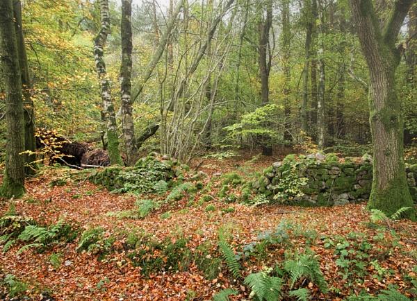 Fallen leaves by BillRookery