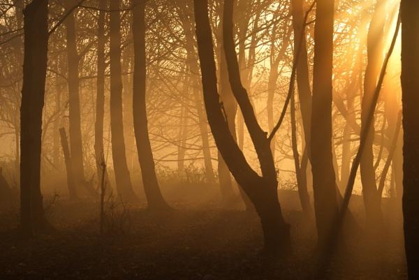 sun, mist, trees by alfpics