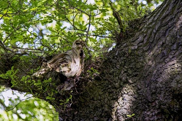 Wood Pigeon? by Owdman
