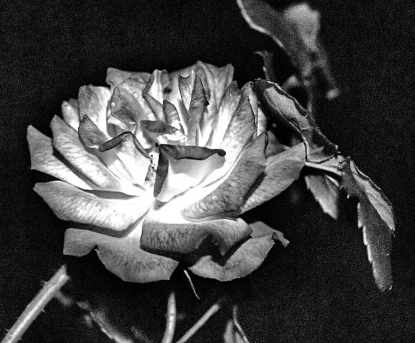 Black N white by KrazyKA