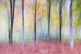 Autumn's colour palette