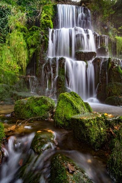 Wiltshire Jungle by CrustyPics
