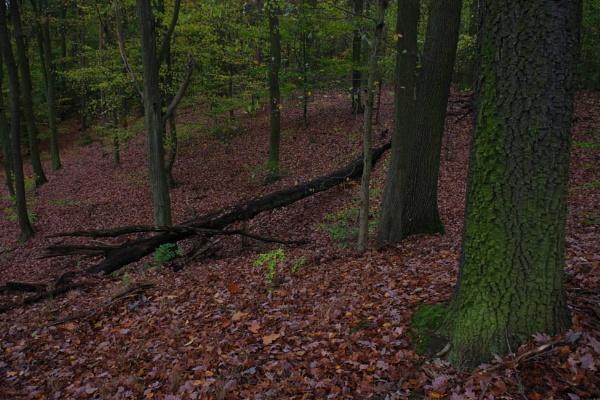 Autumnal Series - Oak Tree by PentaxBro