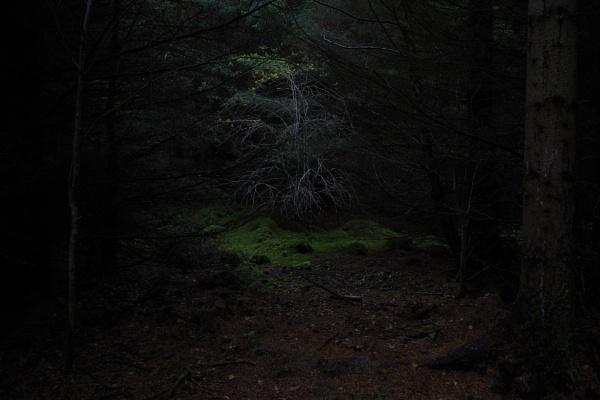 Autumnal Series - Dark Forest by PentaxBro