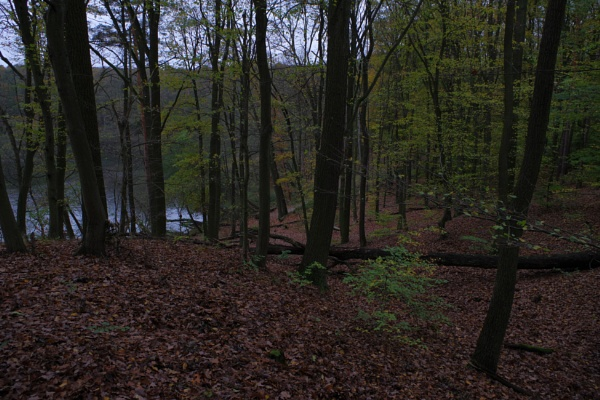 Autumnal Series - Lake View Forest by PentaxBro