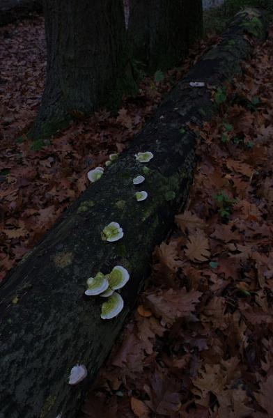 Autumnal Gleam Series #44 by PentaxBro
