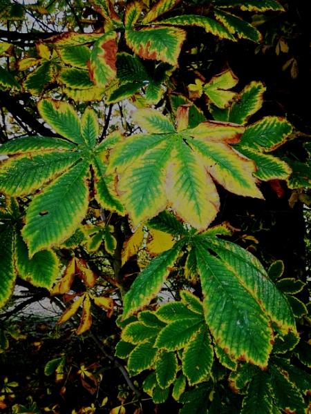 Autumnal Series - Glowing Leaves by PentaxBro