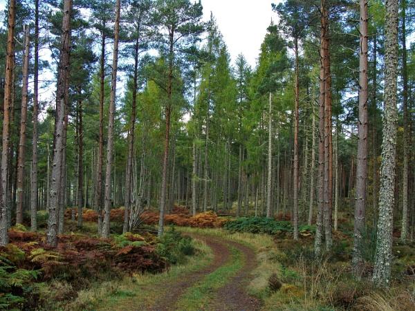 Autumnal Series - Winding Road by PentaxBro