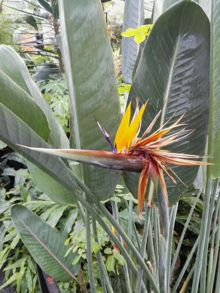 Botanical Gardens 2 by PentaxBro