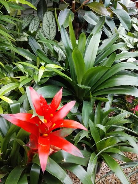 Botanical Gardens 6 by PentaxBro
