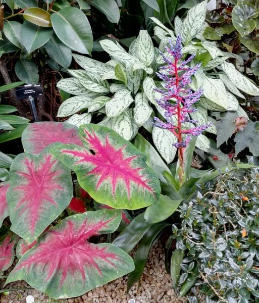 Botanical Gardens 7 by PentaxBro